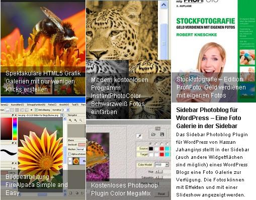 Dynamic Grid: WordPress Posts Feed Slider
